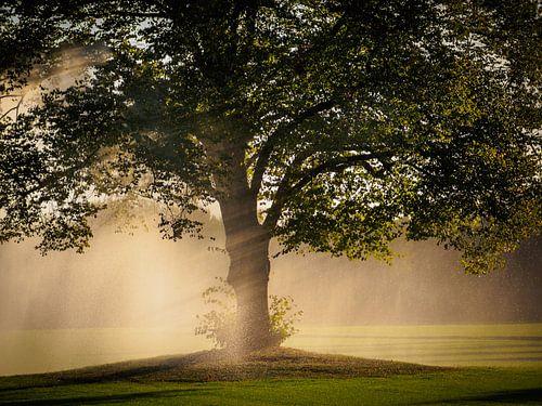 Regen boom van