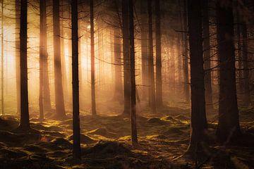 Licht im Dunkeln von Bas Meelker