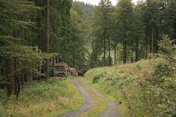 Pad in het bos von Lisanne M