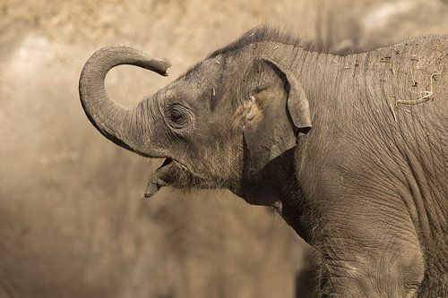 baby olifant die voor mama staat