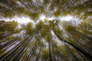 Het bamboebos in Arashiyama (Kyoto). van Claudio Duarte