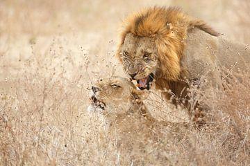 Parende leeuwen van Anja Brouwer