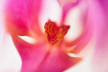 LP 71154510 Gros plan d'une orchidée rose sur BeeldigBeeld Food & Lifestyle