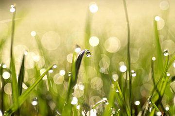 Morgentau im Gras von