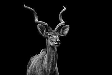 Antilope von Hermann Greiling