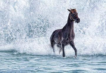 Paard in de golvende zee van Marcel van Balken