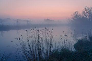"""Niederländische Landschaft """"Schilf im Nebel"""" von Coen Weesjes"""