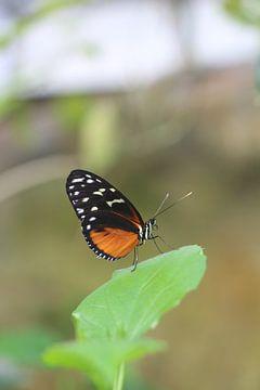 Close up van een vlinder van Clicksby JB
