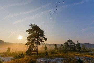 Zonsopkomst Brunssummerheide tijdens mist von Remco Van Daalen