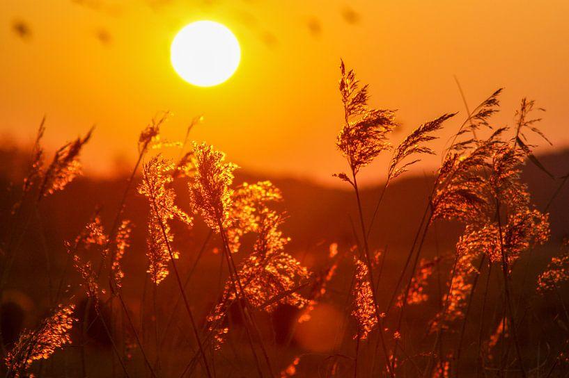 Sunny days van Dirk van Egmond