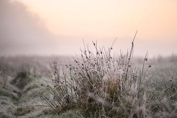 kalte Herbststimmung von Tania Perneel