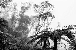 Regenwoud in de mist IX