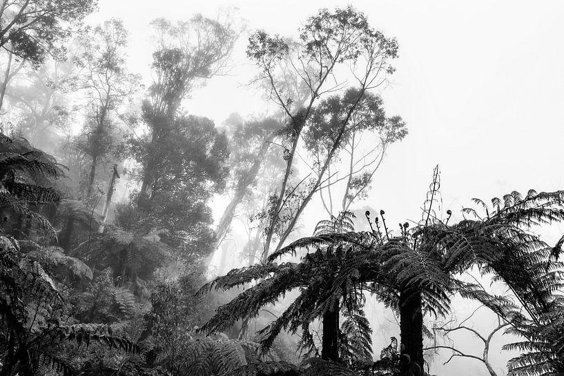 Regenwald im Nebel IX von Ines van Megen-Thijssen