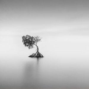 Eenzaam van