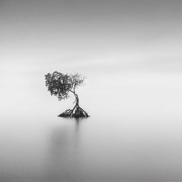 Eenzaam van Niels Devisscher