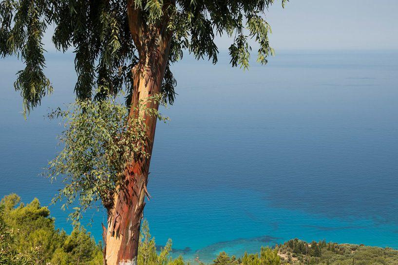 De Ionische zee met Eucalyptus boom, Lefkas van Sven Wildschut