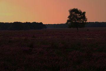 Hilversum vertäut bei Sonnenuntergang von Maaike