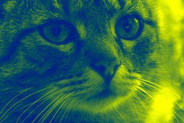 kleurrijke kat van Andrea Meister
