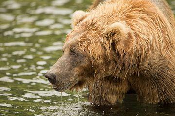 Bruine beer aan het vissen van Natasja Tollenaar