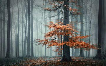 The autumn dress von Rob Visser