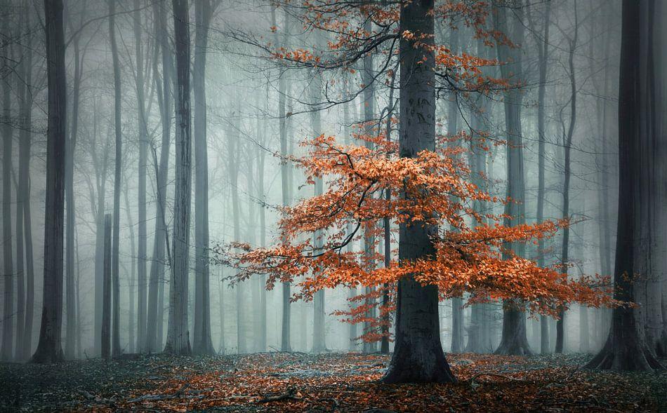 Herfst jurk van Rob Visser
