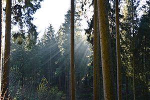 Zon en bomen van Susanne Seidel