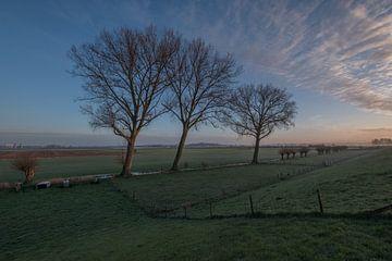 Bomen van Moetwil en van Dijk - Fotografie