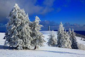 Arbres à neige sur le Felberg sur Patrick Lohmüller