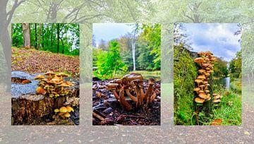 Herfst drieluik met paddenstoelen in het bos van Photo Henk van Dijk
