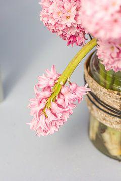 Baby roze hyacinten van Petra Brouwer