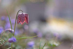 bloemen part 108 van Tania Perneel