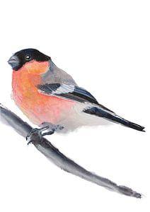Der Gimpel Vogel Illustration