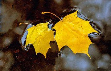 Gele herfstbladeren van Laimute Kuriene