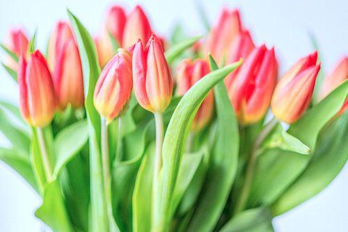 Spring is here II van