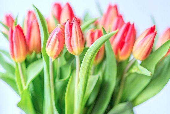Spring is here II van Richard Marks