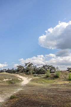 staande foto van de Veluwe met blauwe lucht en wolk