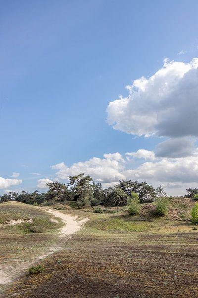 staande foto van de Veluwe met blauwe lucht en wolk van Thomas Winters