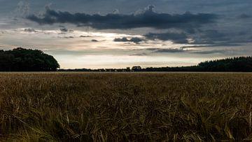 Sonnenaufgang über dem Korn von Timo Bergenhenegouwen