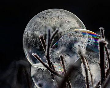 With frost colors fade von Stefanie van Dijk