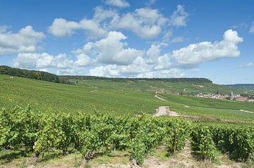 Wijnlandschap in de Champagnestreek van Peter Eckert