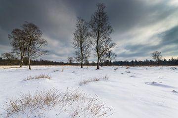 Schnee auf der Veluwe von Ronald Bergkamp Nature Photography
