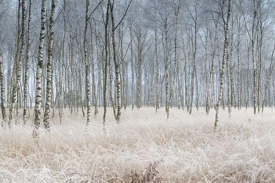 Winter wonder land van Remco Stunnenberg