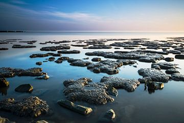 Wadden Sea. sur AGAMI Photo Agency