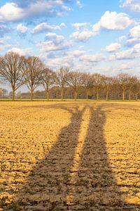 Langwerpige schaduw van bomen over het akkerland-in kleur