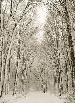 Winterwald von Wendy Drent