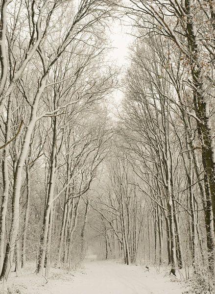 Winterbos van Wendy Drent