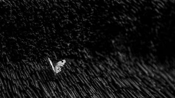 Schmetterling Schwarz/Weiß von Awid Safaei