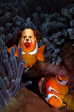 voedende clown vis van Dray van Beeck