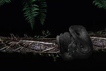 The black snake von Elianne van Turennout