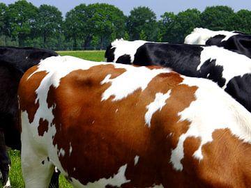 Koeien in de wei. von Joke Schippers